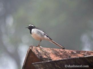 bird-674